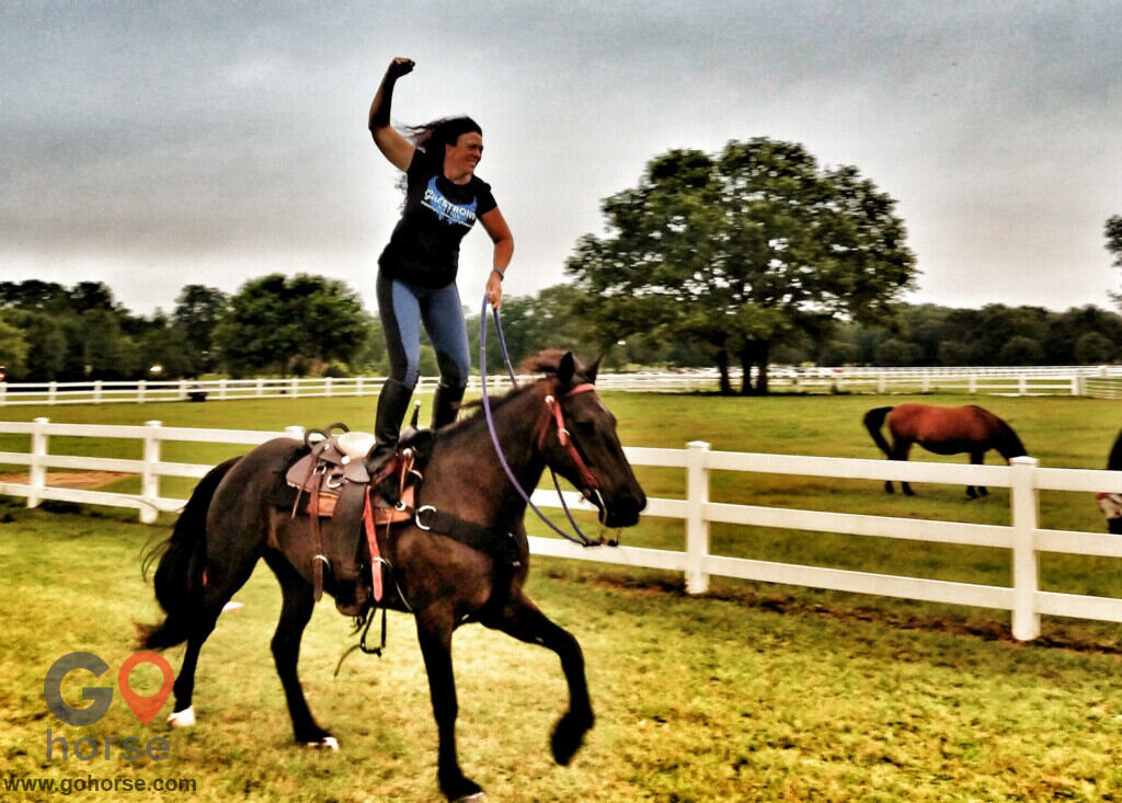 Amazing Gaits Equestrian Center Horse stables in Theodore AL 7
