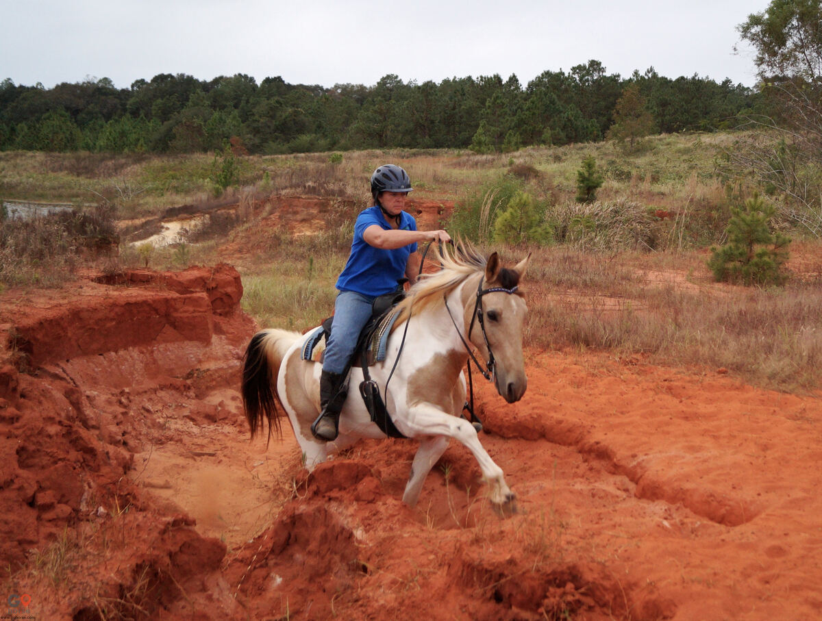 Amazing Gaits Equestrian Center Horse stables in Theodore AL 2