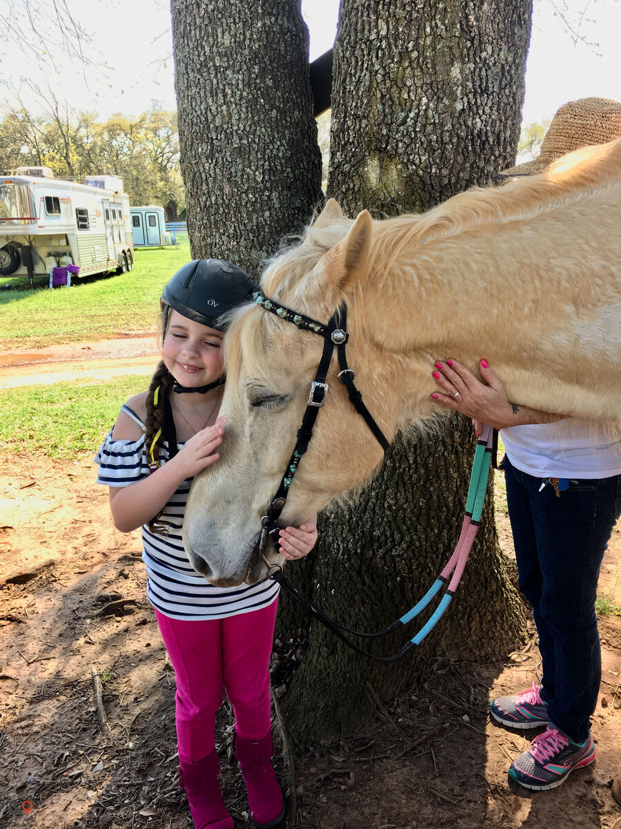 Amazing Gaits Equestrian Center Horse stables in Theodore AL 6