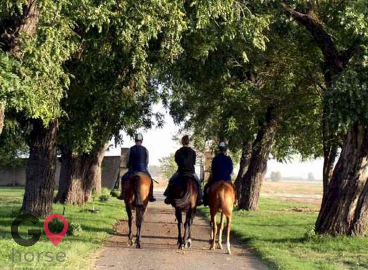 Victory Rose Thoroughbreds Horse stables in Vacaville CA 1
