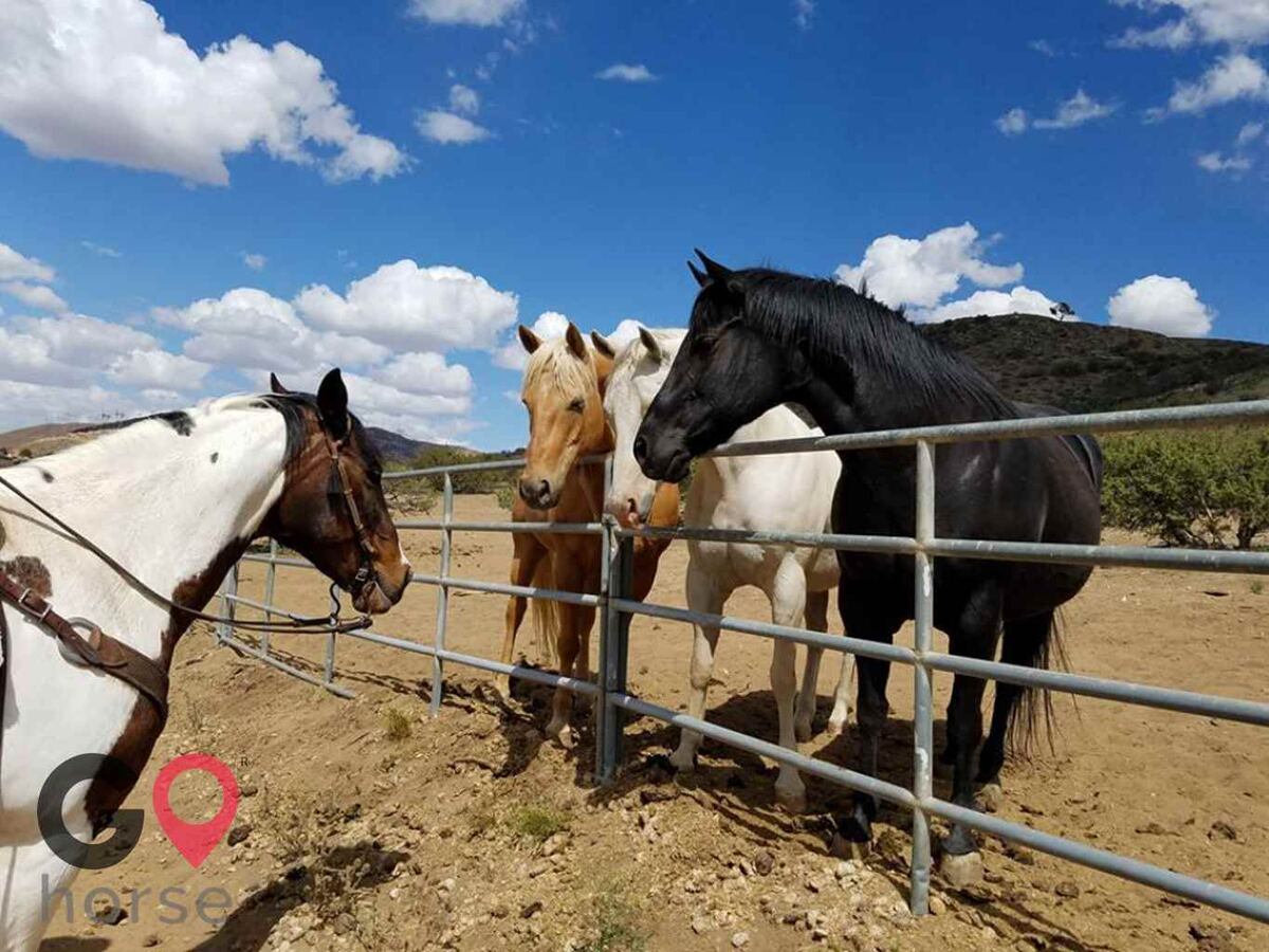 Wild Sage Canyon Ranch Horse stables in Acton CA 1