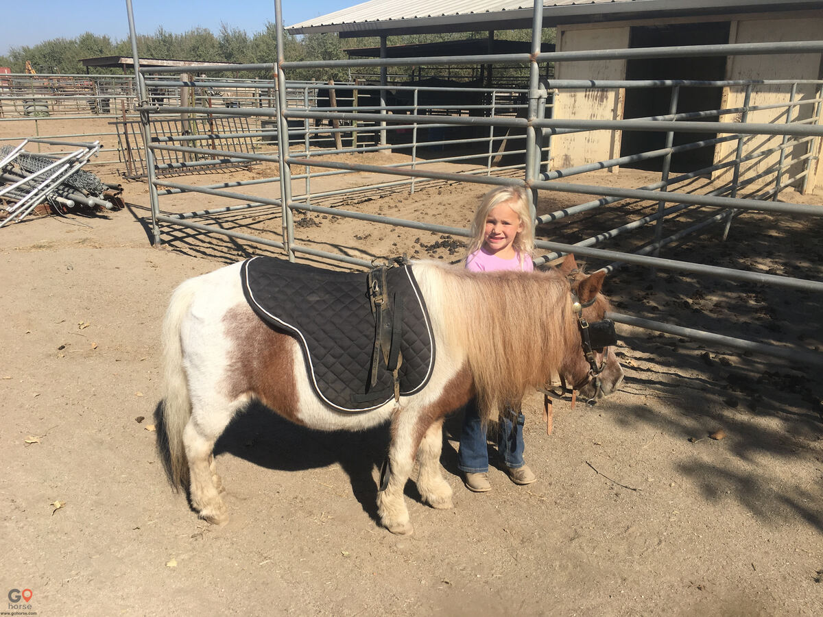The Groen Family Ranch Horse stables in Ripon CA 3