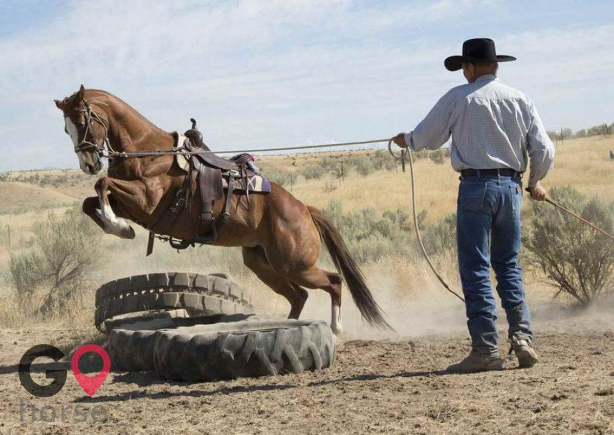 Nabel Horse Training Horse stables in Caldwell ID 1