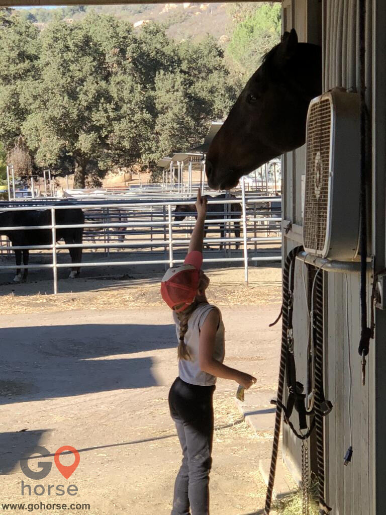 Glyn-Rae Stables Horse stables in Jamul CA 3