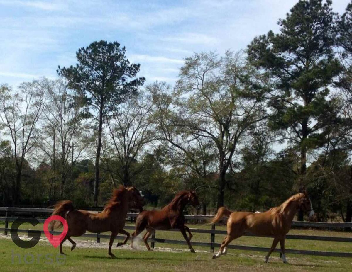 Pine Haven Stables Horse stables in Brunswick GA 1