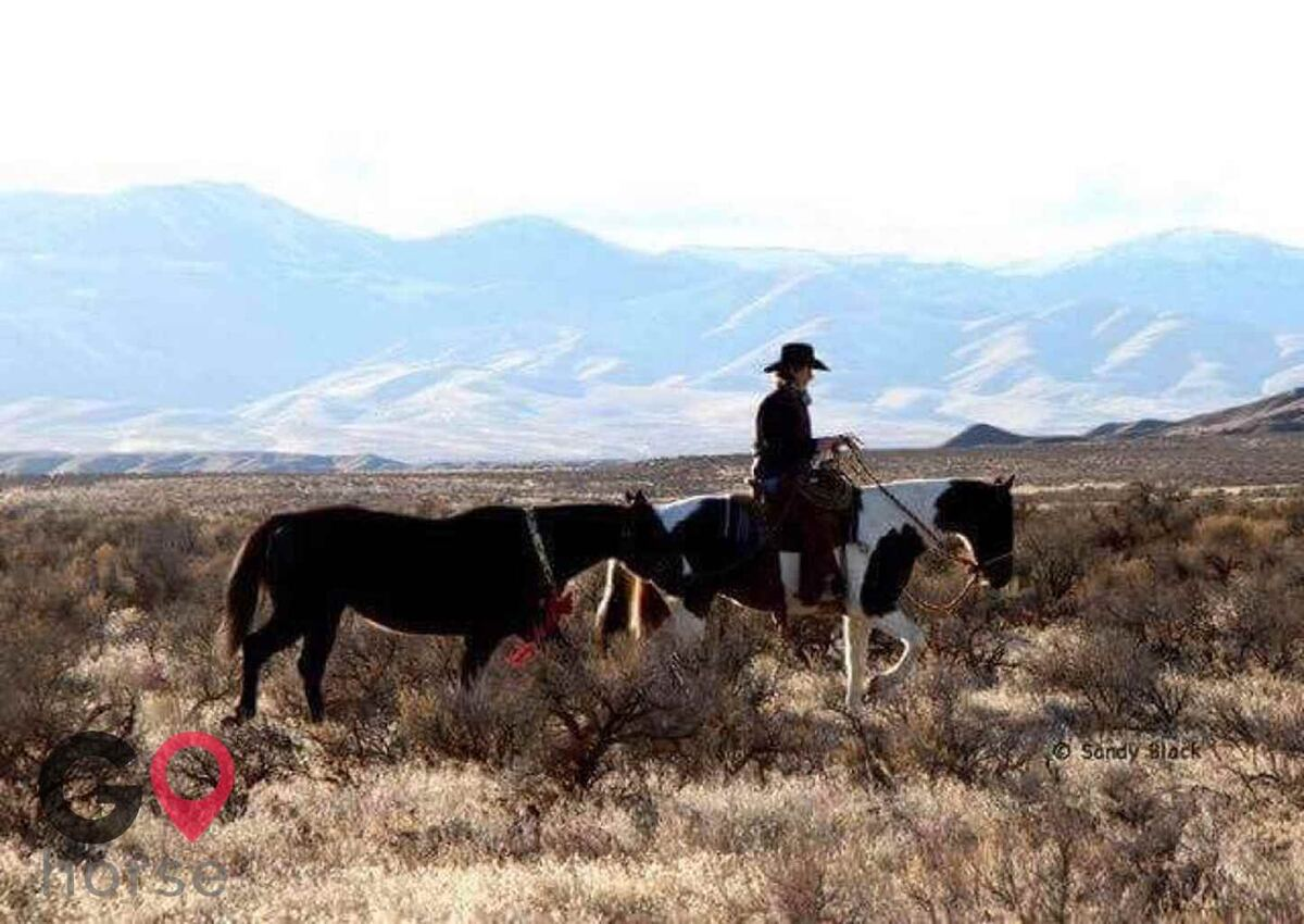 JF Bar Equine Services Horse stables in Marsing ID 1
