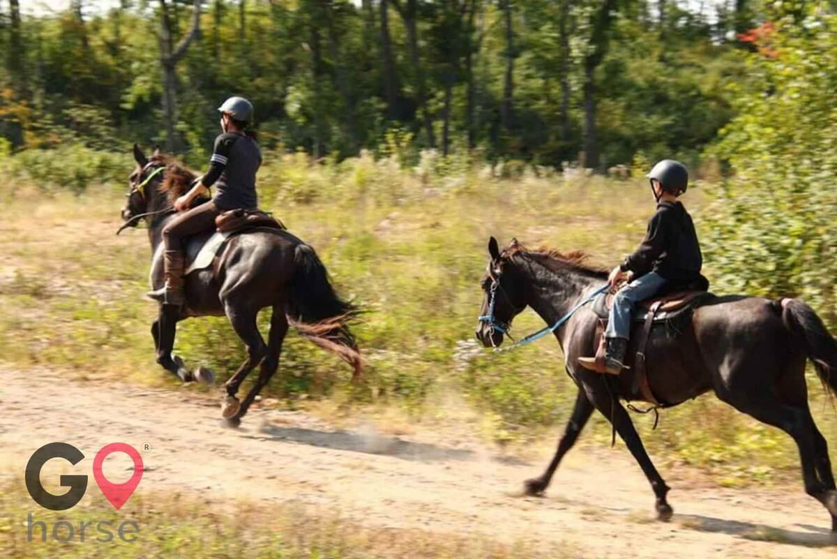 North Gait Horse Company Horse stables in Loon Lake Township MN 1