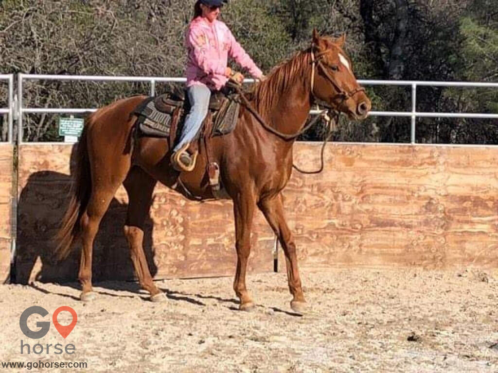 Standridge Horse Training Horse stables in Mountain Ranch CA 3