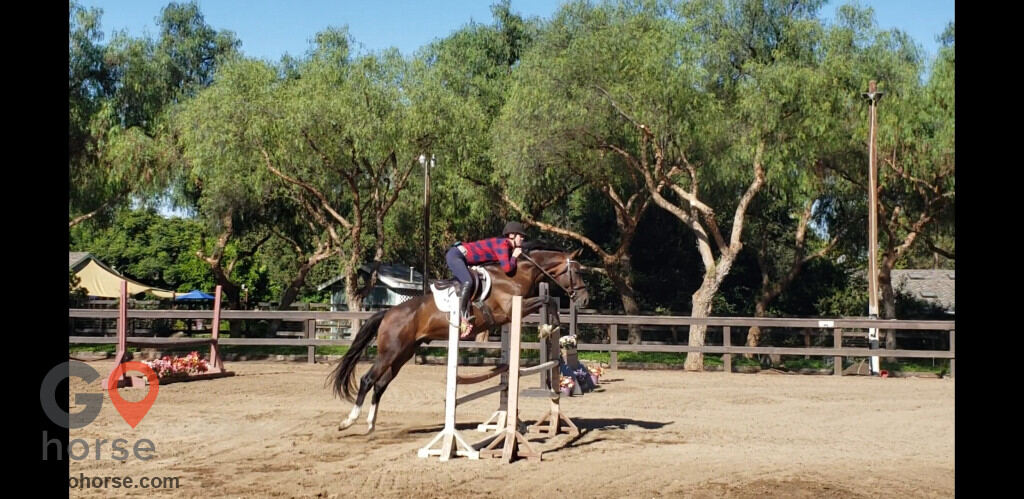 Pepper Creek Equine Center Horse stables in Ramona CA 1