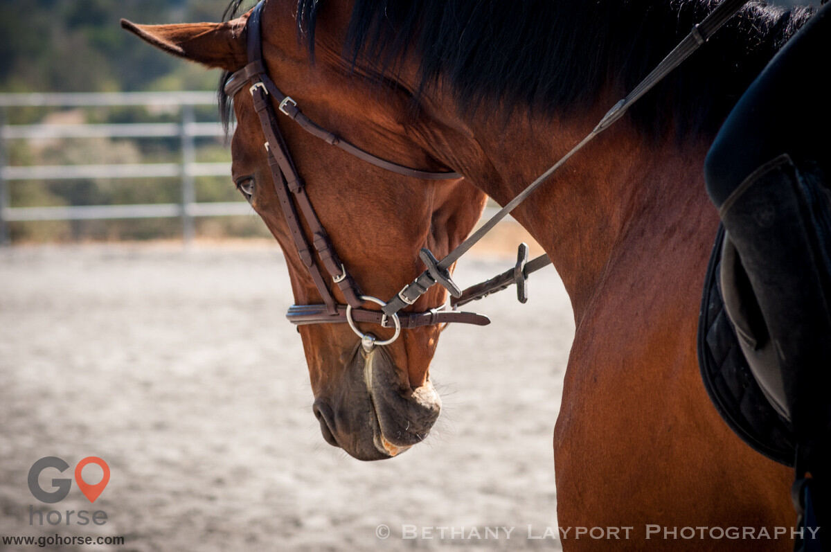 Excel Equestrian Horse stables in Woodside CA 2