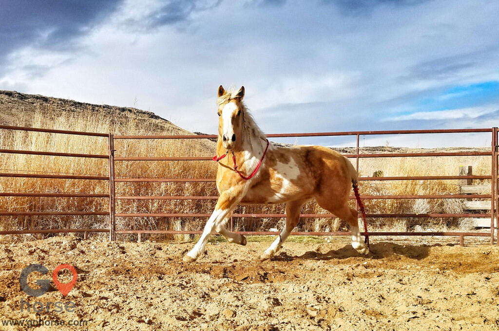 TLC Cattle & Horsemanship Horse stables in 91 Hill Rd ID 1