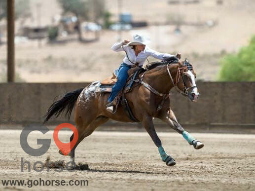Sun & Sand Stables Horse stables in El Mirage CA 3