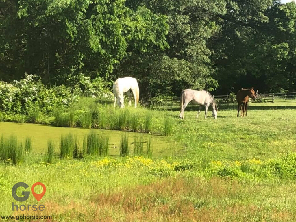 Bella Storms Equestrian Center. Horse stables in Fayetteville AR 1