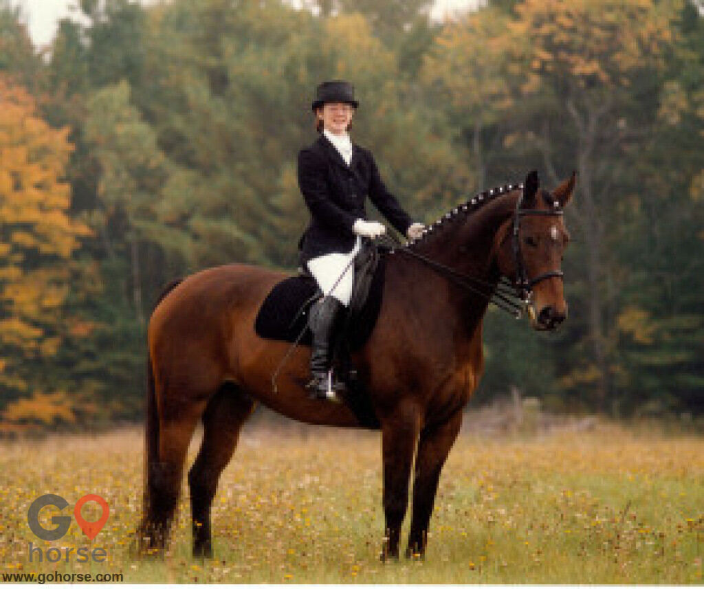 Settlement Farm Horse stables in Townsend MA 1