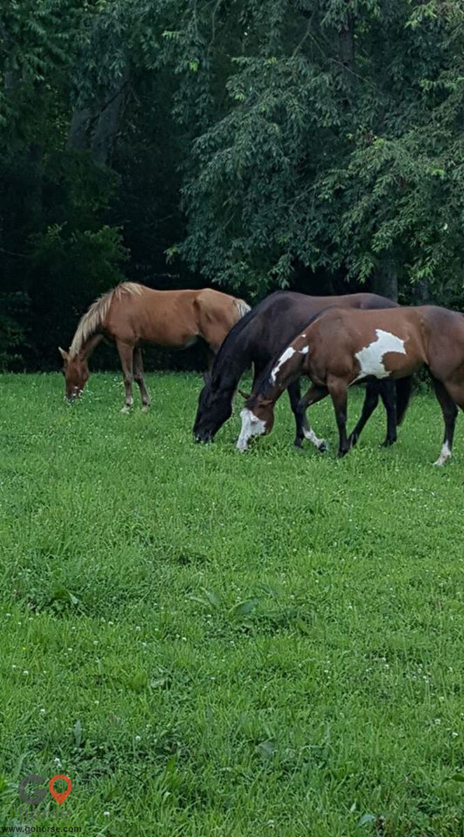 TreeTop  Stables Horse stables in Crittenden KY 1