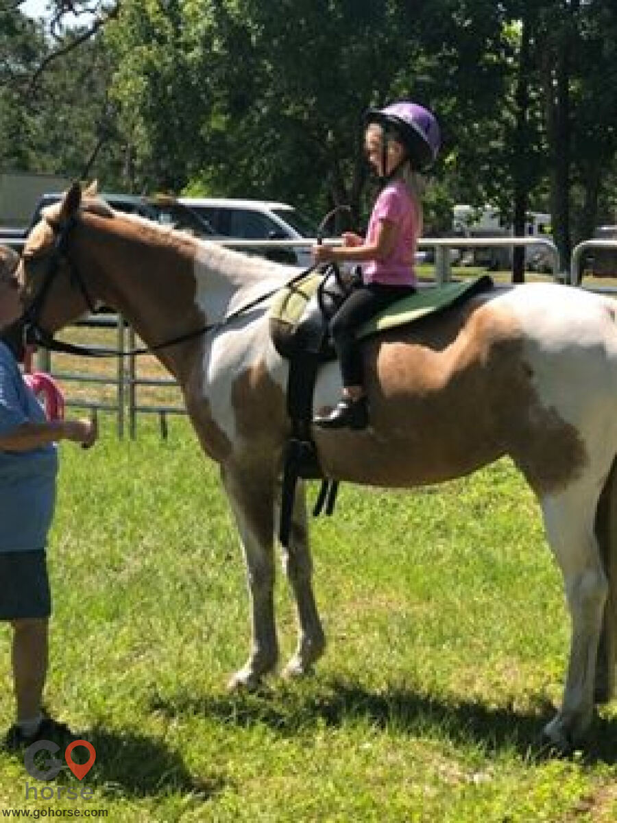 South Mountain Girls Ranch Horse stables in New Smyrna Beach FL 1