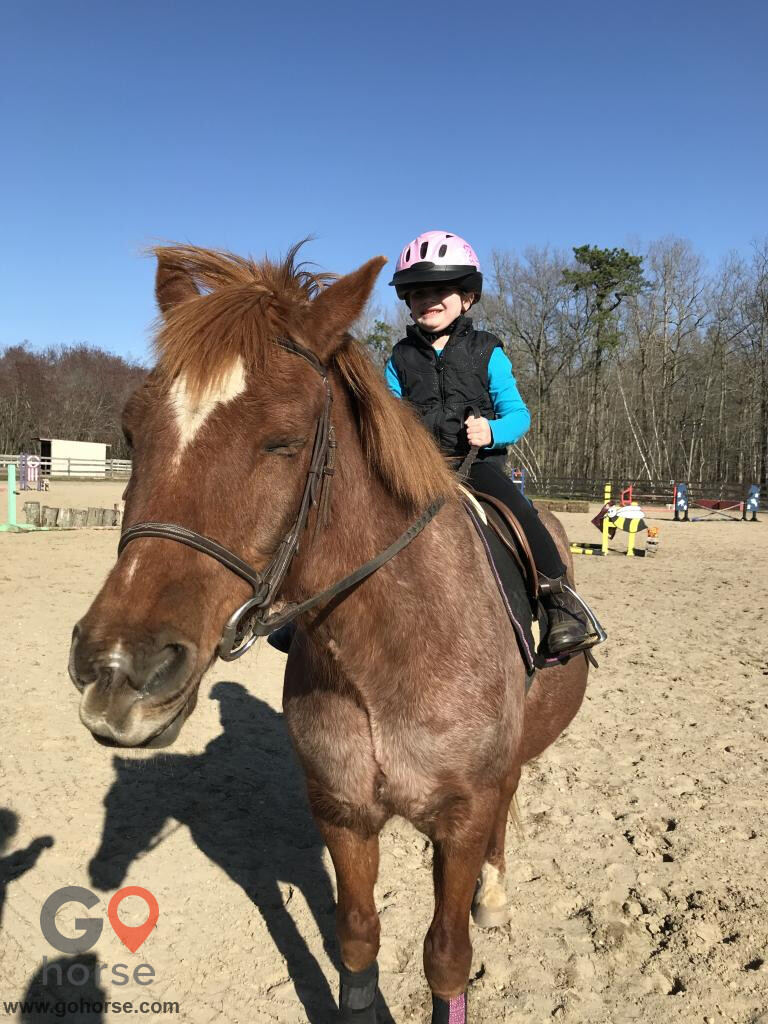 GoHorse | Serenity At Last Farm | Horse Stables in Howell ...