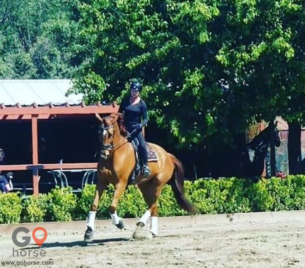 Fortissimo Farm Horse stables in Shadow Hills CA 1