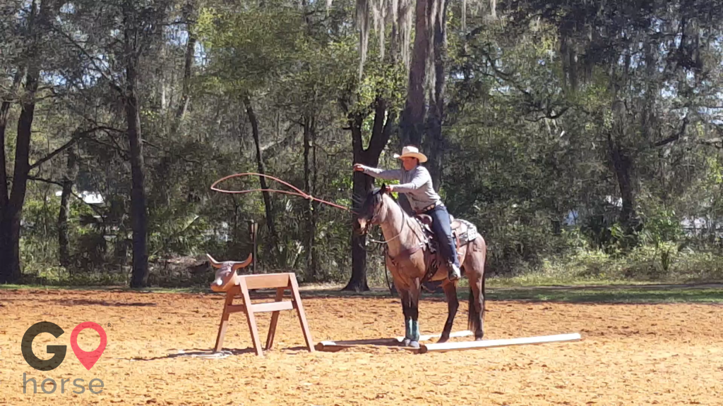 Wolf Song Acres Horse stables in Dunnellon FL 7