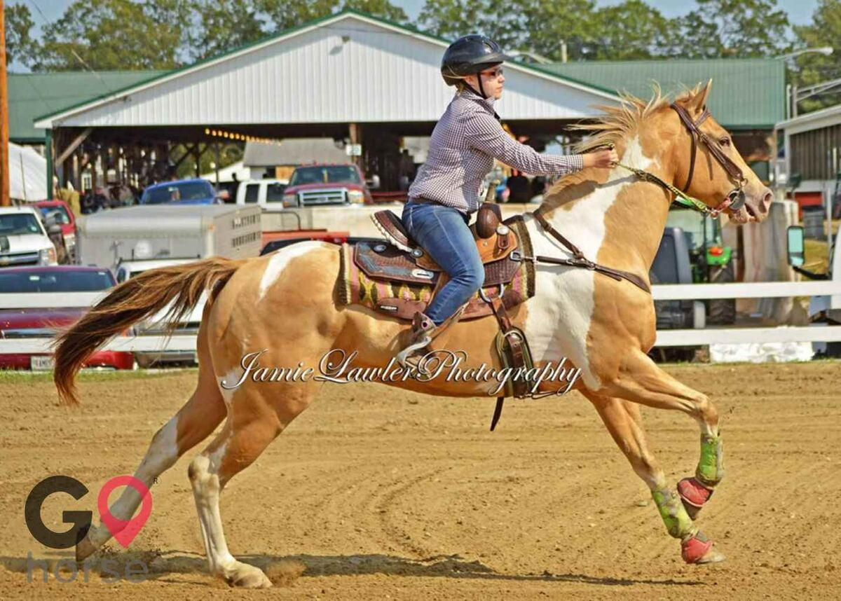 H&H Pony Farm Horse stables in West Gardiner ME 6