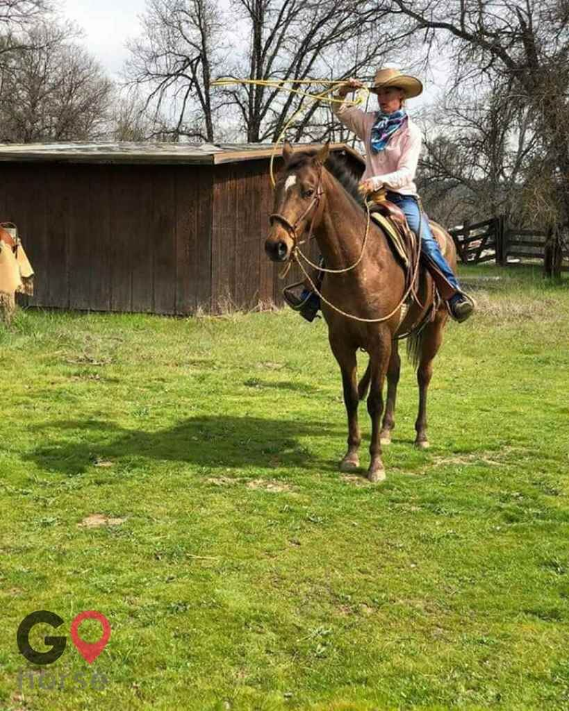 Standridge Horse Training Horse stables in Mountain Ranch CA 9
