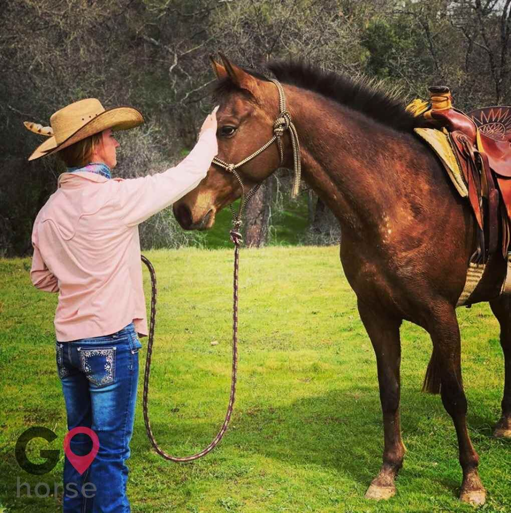 Standridge Horse Training Horse stables in Mountain Ranch CA 1