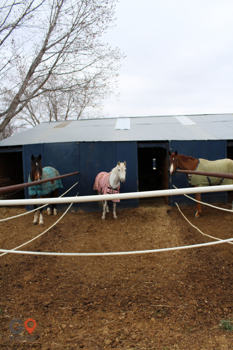 Four Winds Horse stables in Fort Collins CO 13