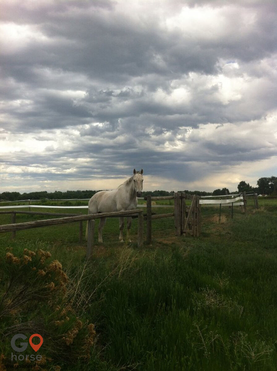Four Winds Horse stables in Fort Collins CO 14