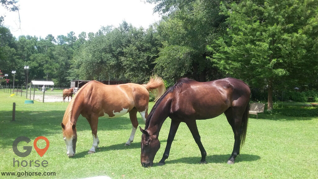 Chainey Briar Stables LLC Horse stables in Ridgeville SC 7