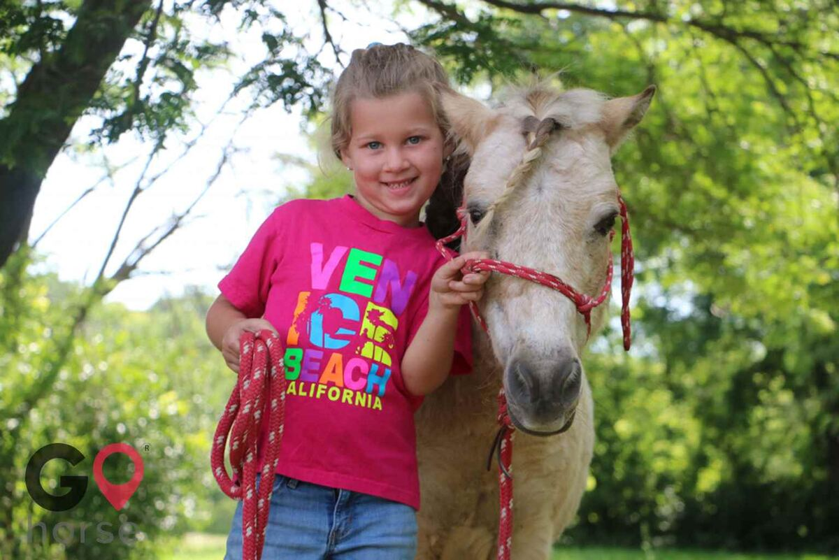 Meadowsweet Ranch Horse stables in Spring Grove IL 9