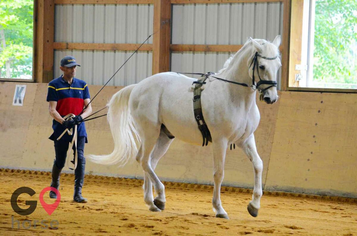 Pillars Equestrian Center Horse stables in Waldorf MD 7