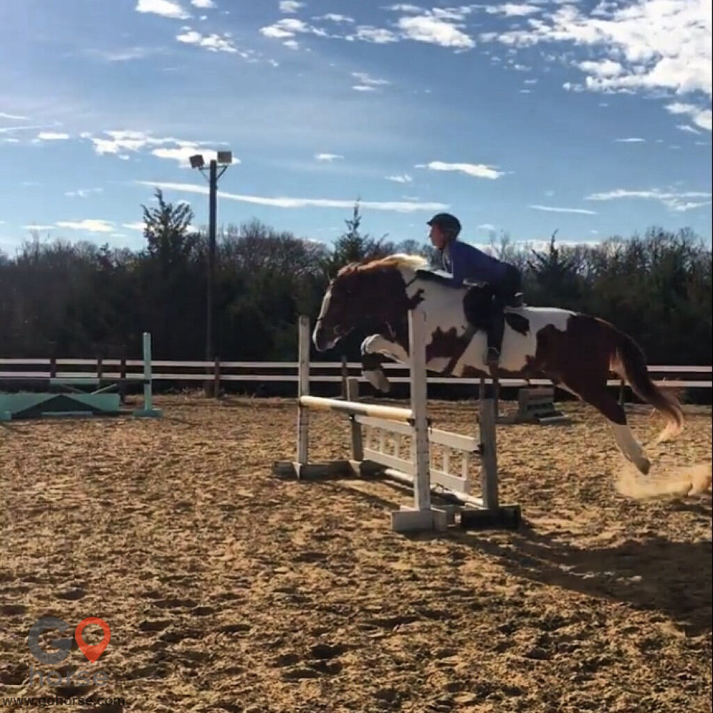 Colonial Equestrian Center Horse stables in Princeton TX 4