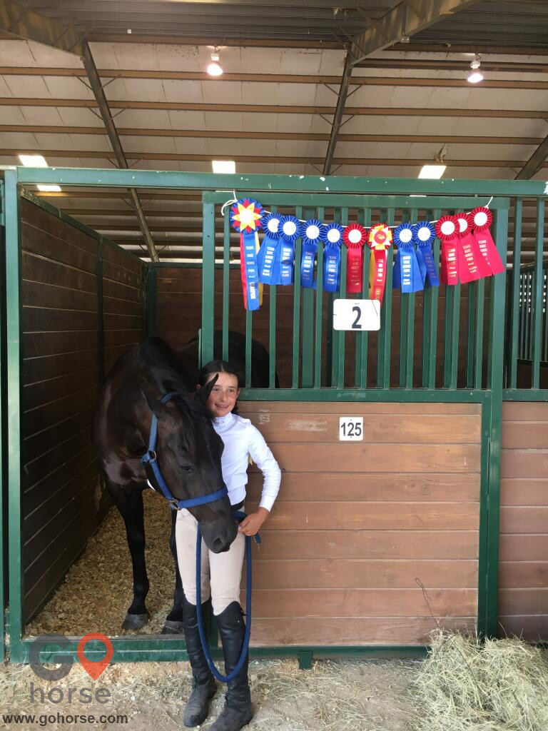 Colonial Equestrian Center Horse stables in Princeton TX 13