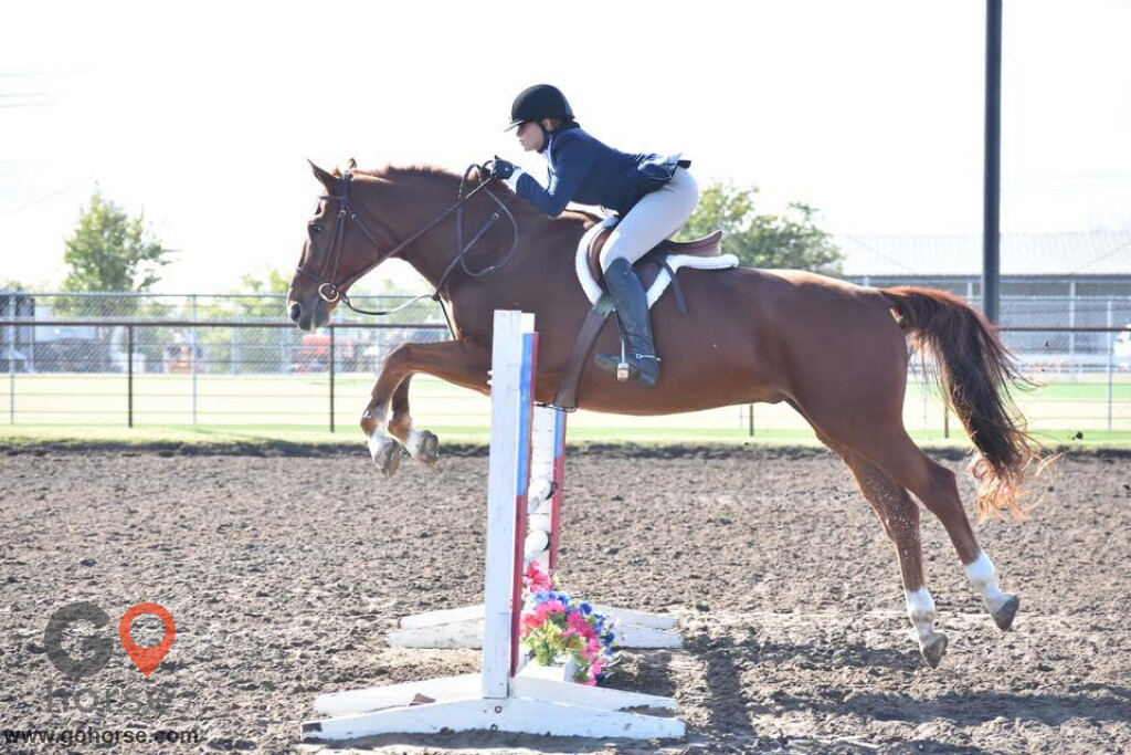 Colonial Equestrian Center Horse stables in Princeton TX 8