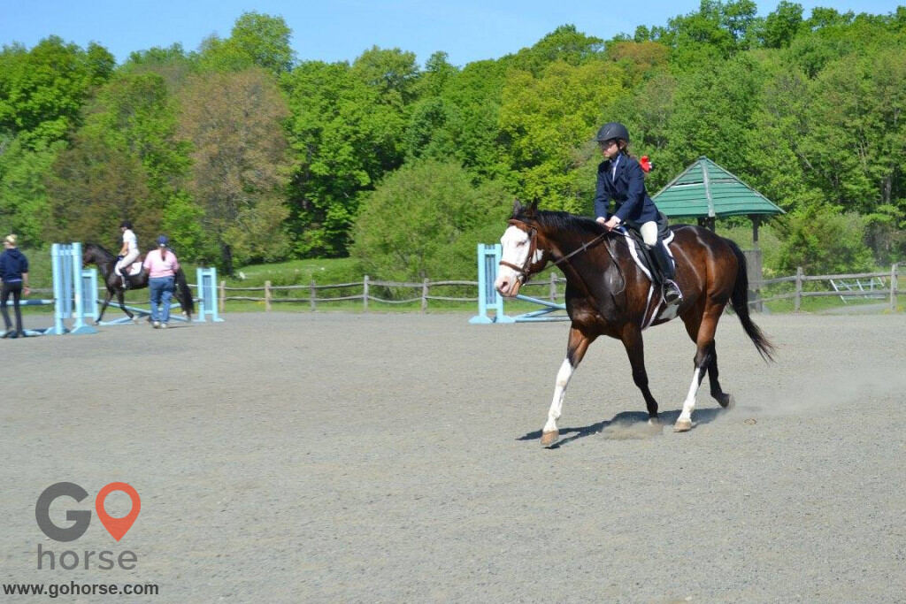 Grandview Farms Equestrian Center Horse stables in Harwinton CT 4
