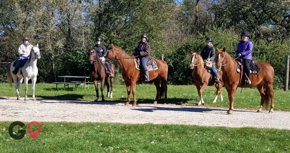 Meadowsweet Ranch Horse stables in Spring Grove IL 11