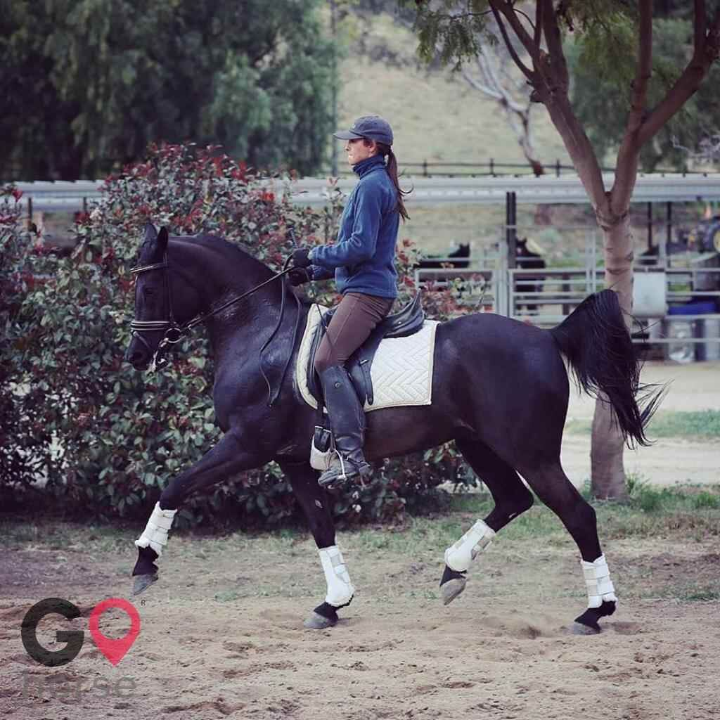 Blue Rose Equestrian @ Onden River Ranch Horse stables in Moorpark CA 1