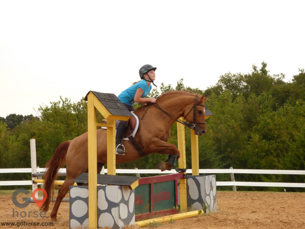 Colonial Equestrian Center Horse stables in Princeton TX 6