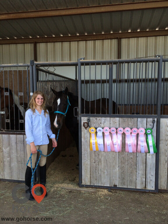 Colonial Equestrian Center Horse stables in Princeton TX 16