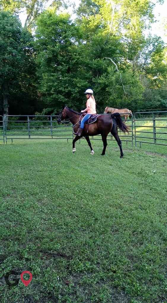 Bridlewood Stables Horse stables in Morris AL 4