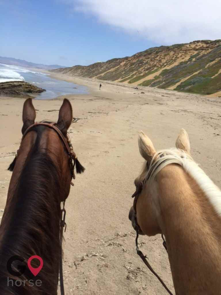 Wild Sage Canyon Ranch Horse stables in Acton CA 3