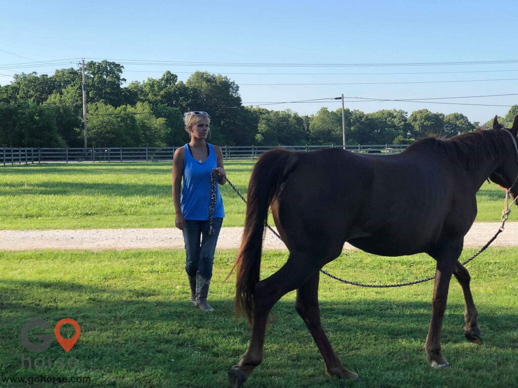 Bella Storms Equestrian Center. Horse stables in Fayetteville AR 4