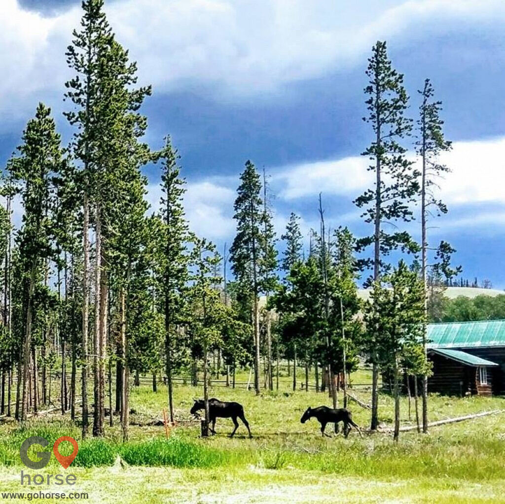crooked creek guest ranch Horse stables in Dubois WY 5