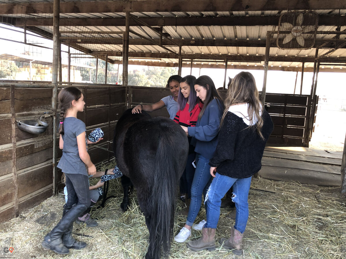 Circle T Ranch Horse stables in Lemoore CA 22
