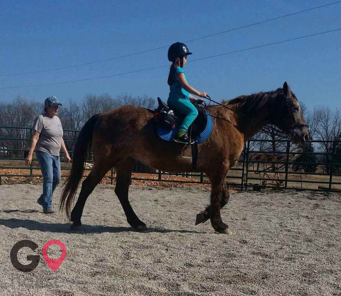 Woodhaven Stables Horse stables in Pineville MO 3