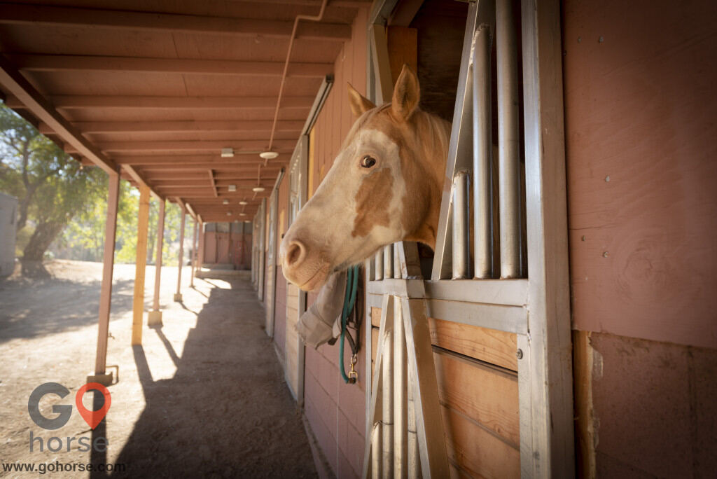 Golden Horse Ranch Horse stables in Sunland-Tujunga CA 6