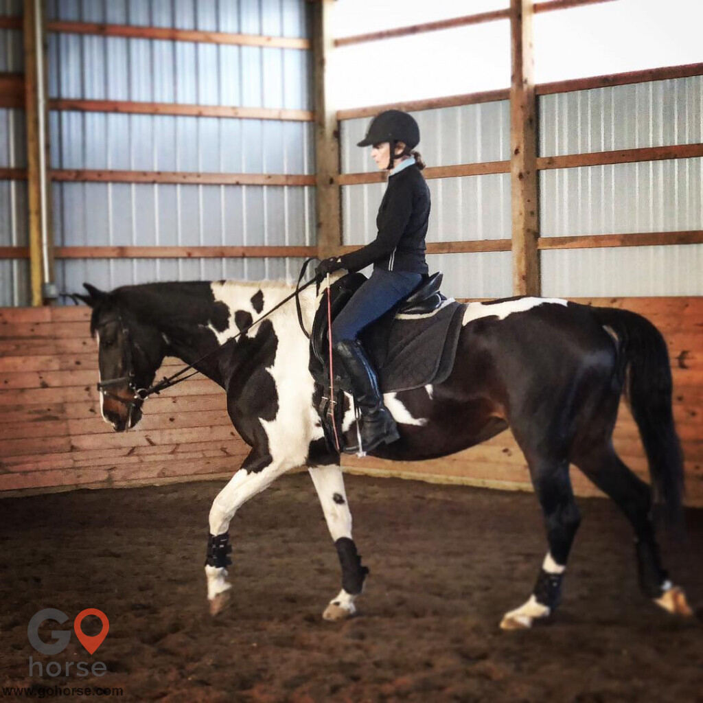 Bear Paw Barn Horse stables in Middletown CT 4