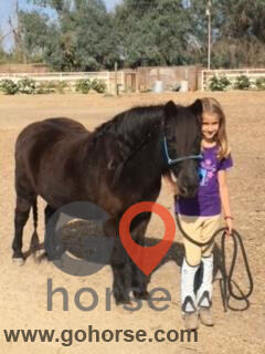 Circle T Ranch Horse stables in Lemoore CA 8