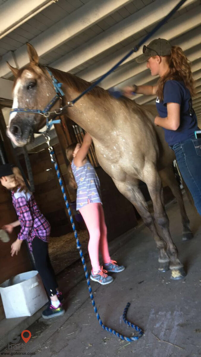 Grandview Farms Equestrian Center Horse stables in Harwinton CT 10