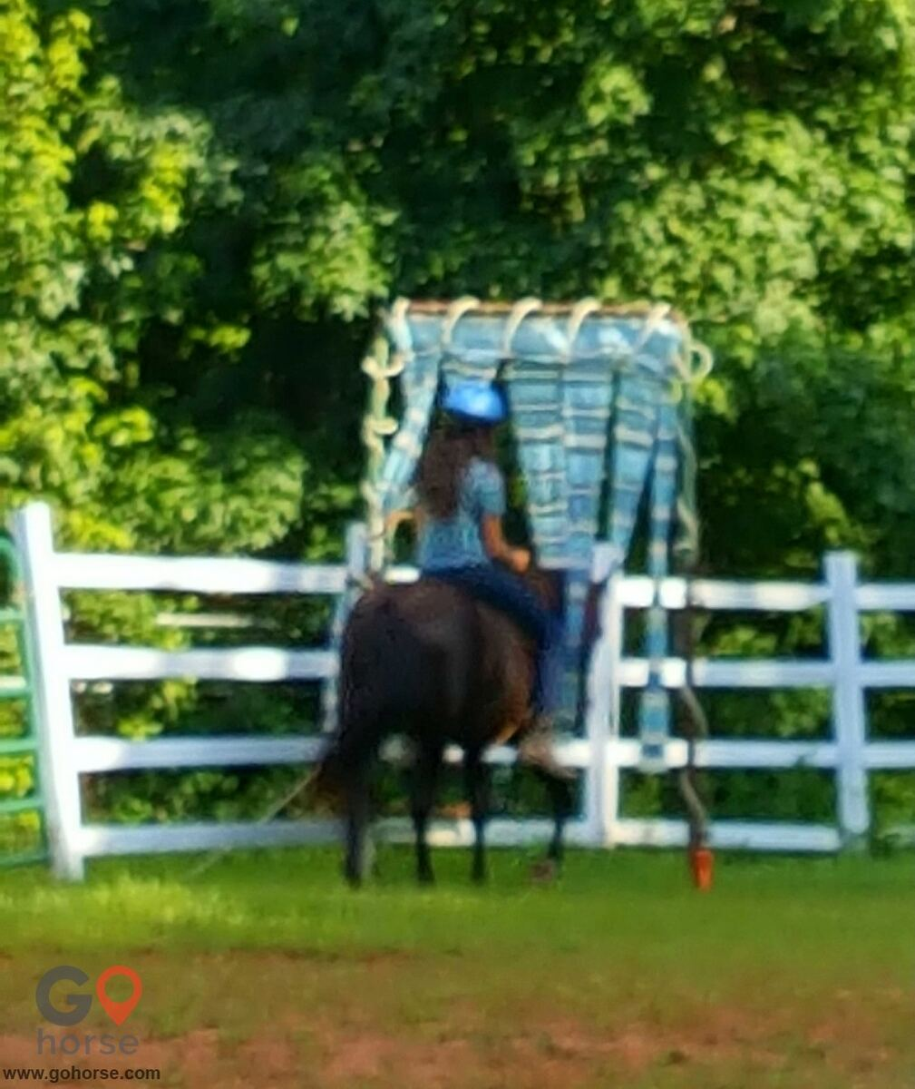 LauraLeigh Farms Horse stables in Dallas GA 3